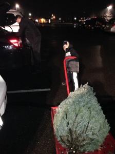 Levando a árvore para casa!