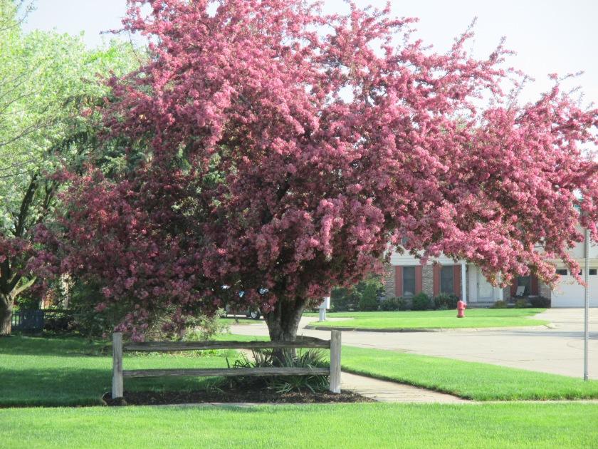 Primavera em Canton, MI
