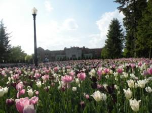 Jardim Botanico de Montreal